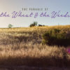 The parable of the wheat & the weeds