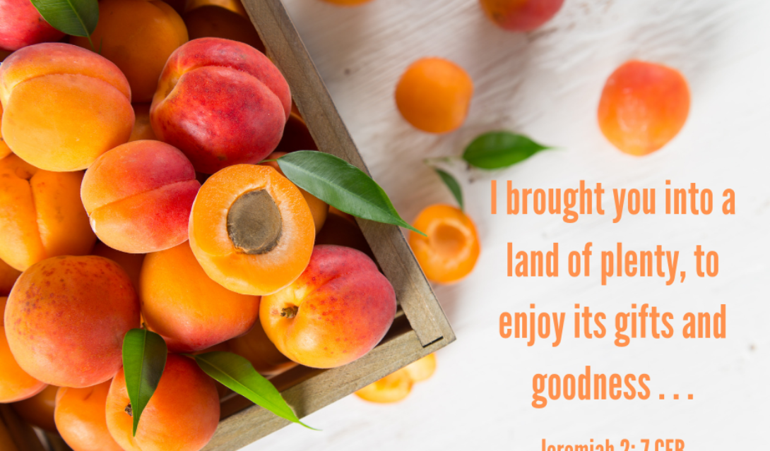 I brought you into a land of plenty, to enjoy its gifts and goodness... -Jeremiah 2:7 CEB